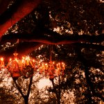 Chandeliers in the trees