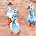 Geese at Blackberry Farm